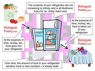The contents of your refrigerator as a steady state